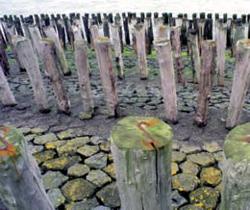 Staketwerk bij het tijhaventje van Groede/Nieuwe Sluis