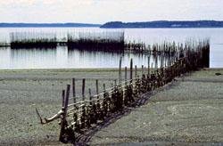 Visweer of weer in de vorm van een V: de vis verzamelt zich bij laag water op het diepste punt