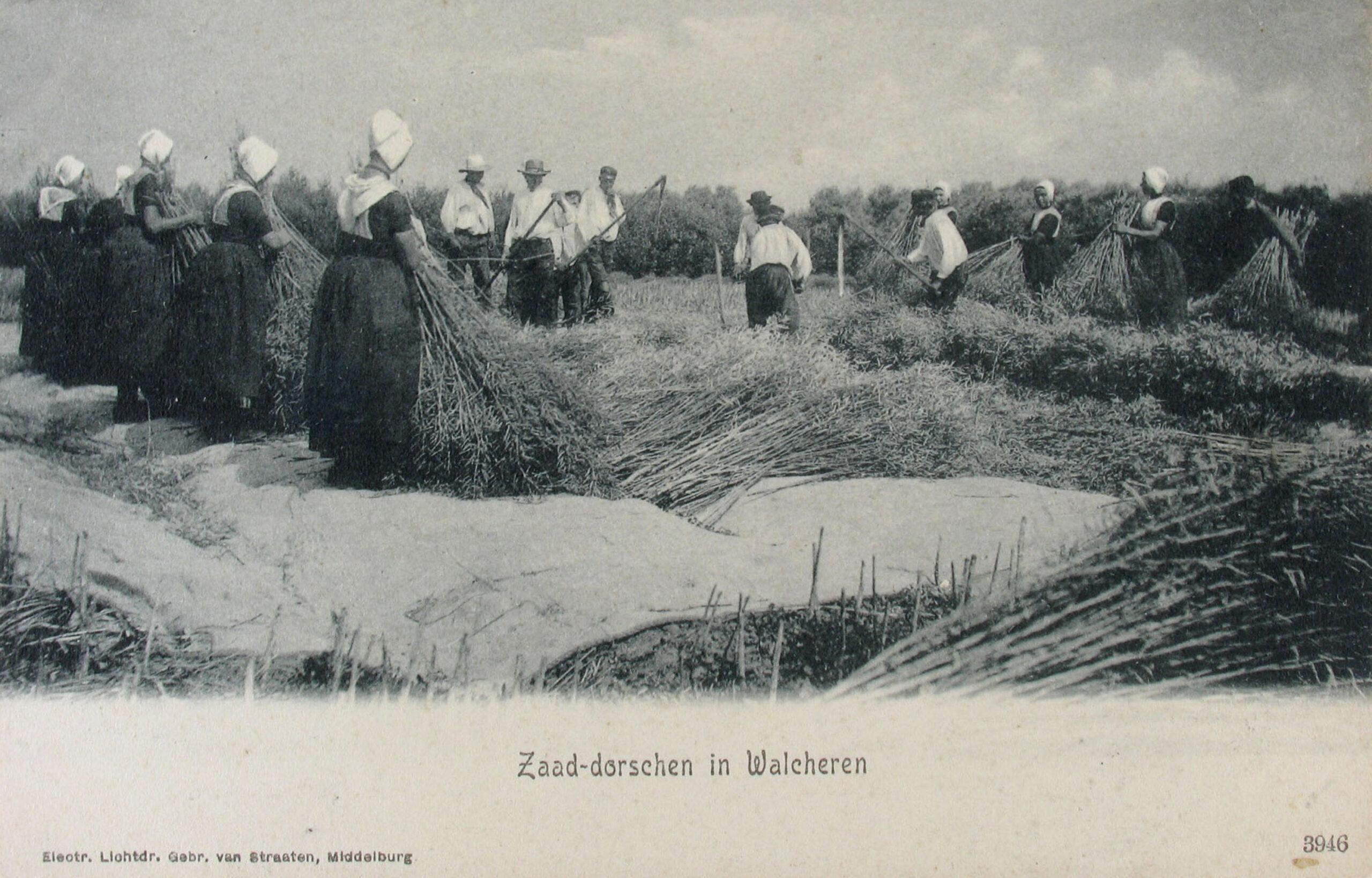 Dorsen op Walcheren (ZB, Beeldbank Zeeland, prentbriefkaart).