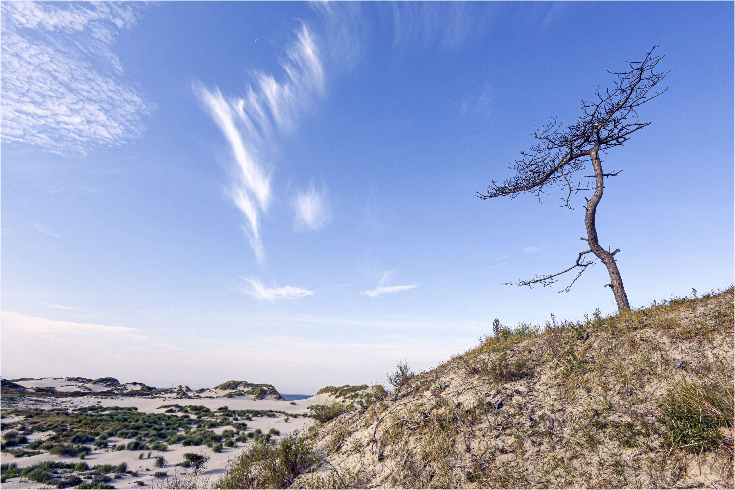 Duingebied Kop van Schouwen (foto Ton Stanowicki, www.beeldbank.zeeland.nl).