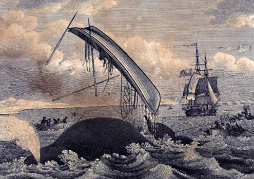 Walvis gooit bootje van walvisvaarders om.