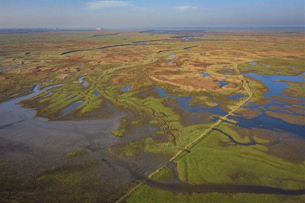 Het Verdronken Land van Saeftinghe (foto Marcelle Davidse).