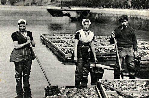 Vrouwen aan het werk in de oesterteelt in Yerseke, circa 1915. (Zeeuwse Bibliotheek, Beeldbank Zeeland)
