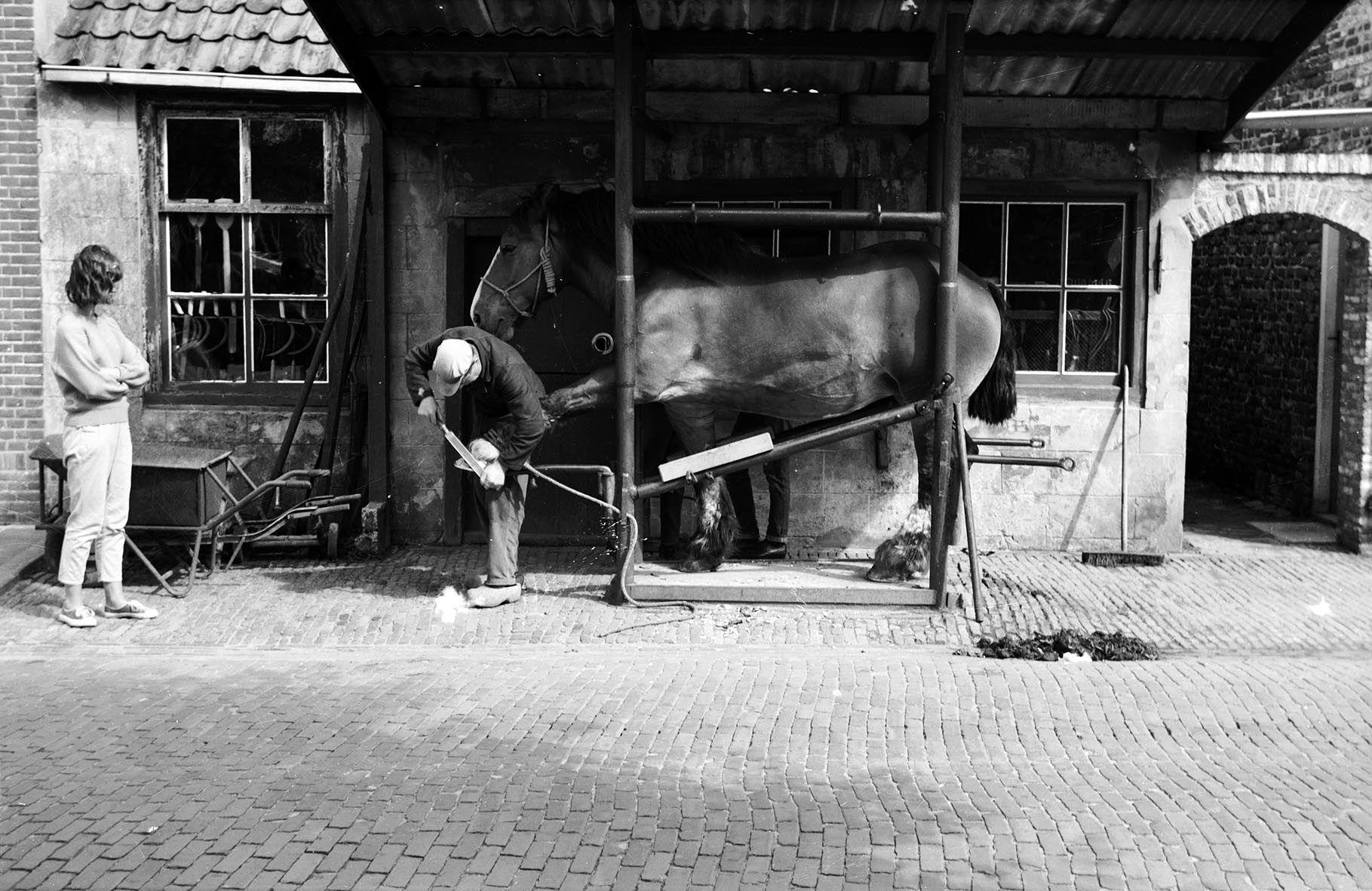 Hoefsmid, omstreeks 1960 aan het werk in de travalje of hoefstal in Biggekerke. (Zeeuws Archief, collectie Zeeuws Genootschap, Zelandia Illustrata)