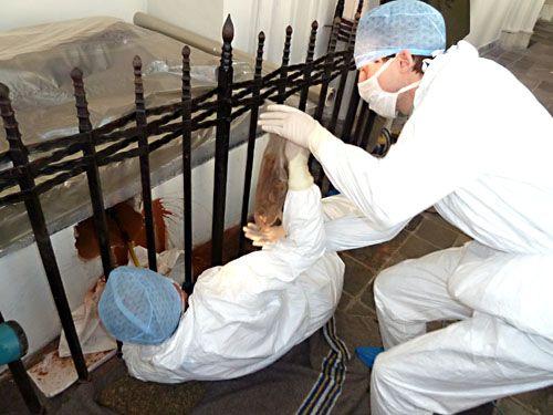 Onderzoek graftombe Koorkerk, 2011. Verwijdering van de skeletresten door professor George Maat.