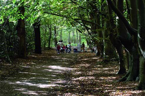 Wandelpad in het bos- en duingebied bij Westhove.