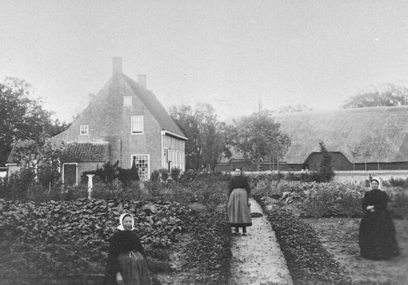 Veel Zeeuwse boeren hadden te weinig eigen grond om van te kunnen leven. Op de foto een kleine moestuin bij een boerderij in Sluis omstreeks 1910. (Zeeuwse Bibliotheek, Beeldbank Zeeland)
