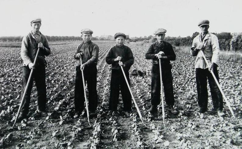 Door de mechanisatie van de landbouw werden veel landarbeiders werkloos. Op de foto landarbeiders in Vrouwenpolder omstreeks 1930. (Zeeuwse Bibliotheek, Beeldbank Zeeland)