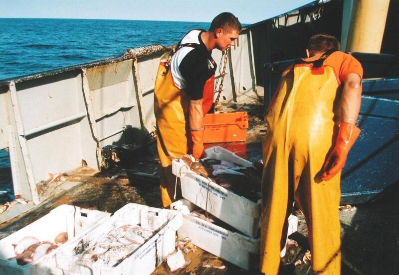 Aan boord van de ARM 44, de Neeltje Jannetje, sjouwen met kisten vis, 2003. (Zeeuwse Bibliotheek, Beeldbank Zeeland, foto W. Helm)