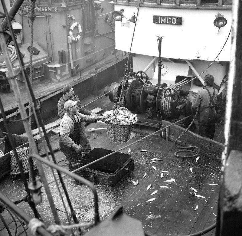 Vis lossen vanuit een vissersboot (de IMCO), nog met rieten manden, 1963. (Zeeuwse Bibliotheek, Beeldbank Zeeland, foto J. Midavaine)