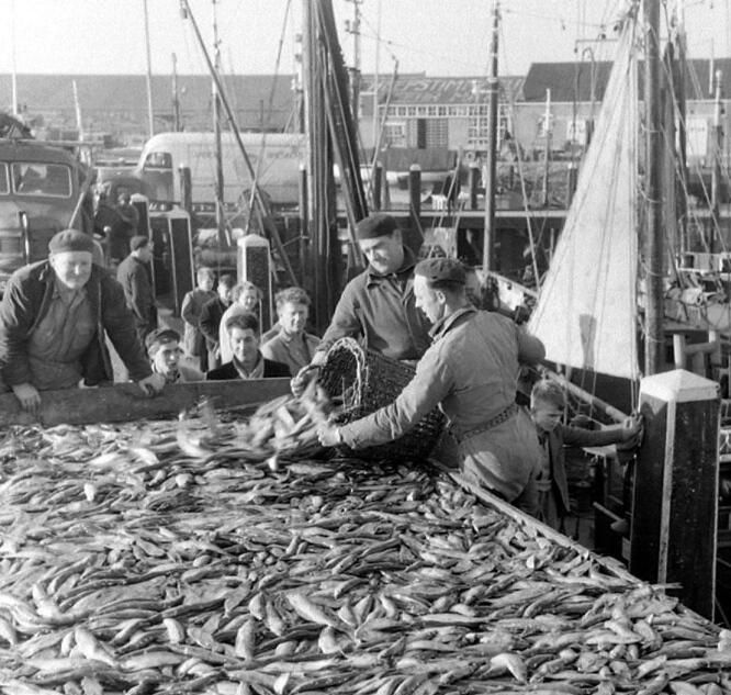 Drukte bij de vismijn van Breskens, circa 1955. (Zeeuwse Bibliotheek, Beeldbank Zeeland, foto O. de Milliano)