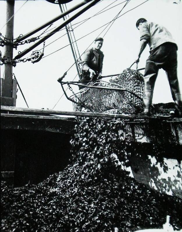 Lossen van mosselen in Yerseke omstreeks 1960. (Zeeuwse Bibliotheek, Beeldbank Zeeland, fotoarchief PZC)