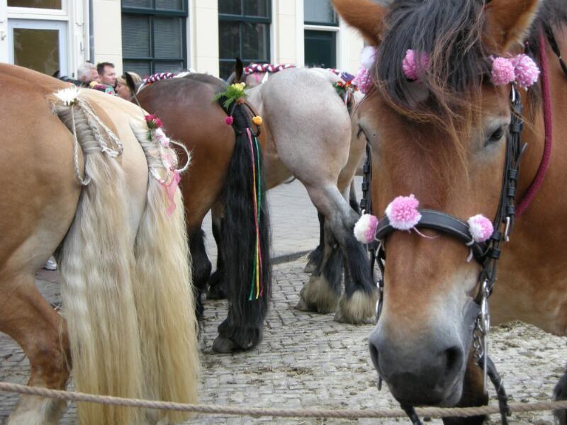 Versierde paarden tijdens een wedstrijd in Vlissingen, 2008. (Zeeuwse Bibliotheek, Beeldbank Zeeland, foto M. Meijer-van der Linde)