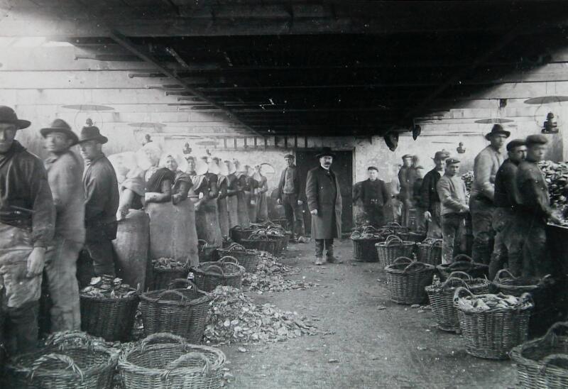 Sorteren van de oesters, 1904. (Zeeuwse Bibliotheek, Beeldbank Zeeland)