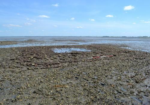 Droogvallende restanten van het verdronken dorp Nieuwlande. (Beeldbank SCEZ)