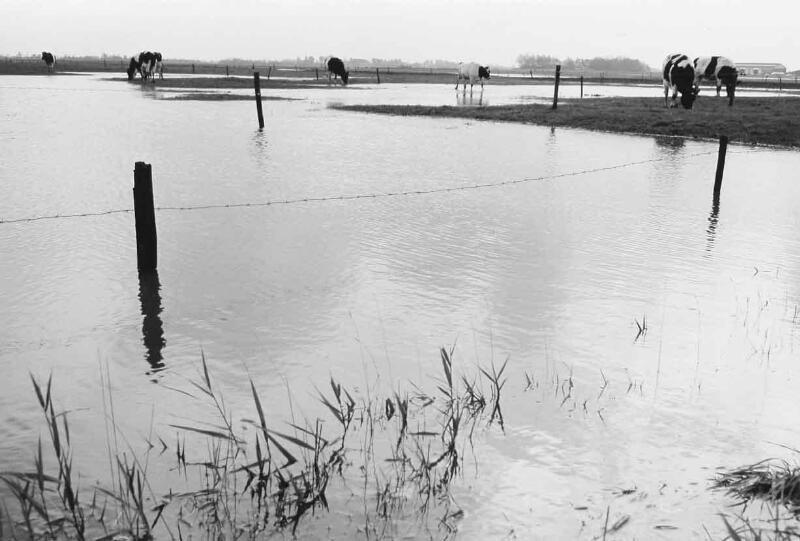 Hoog (binnen)water in de omgeving van Hoogelande (Walcheren), nog in oktober 1974. (Zeeuwse Bibliotheek, Beeldbank Zeeland)