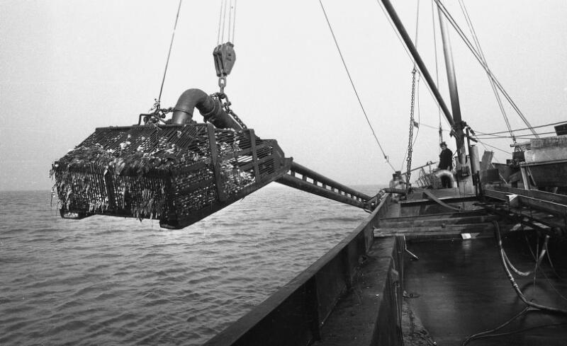 Kokkelvissersboot met vangarm, 1975. (Zeeuwse Bibliotheek, Beeldbank Zeeland, foto C. de Boer)
