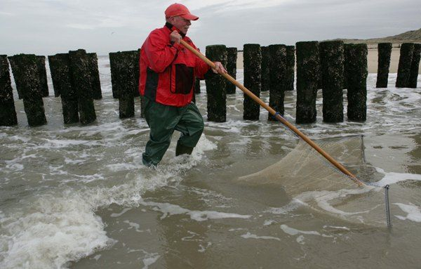 De visser duwt de garnalenkor voor zich uit door de zee.