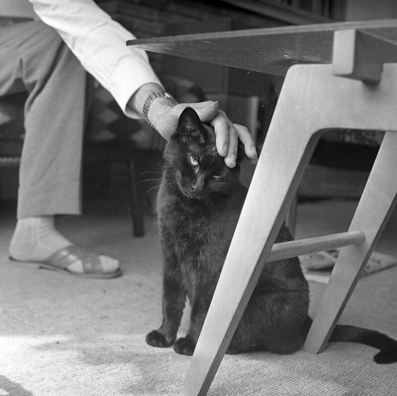 Een zwarte kat - hier vriendelijk geaaid - wordt beschouwd als een brenger van ongeluk. Vlissingen 1962. (Zeeuwse Bibliotheek, Beeldbank Zeeland, fotoarchief PZC)