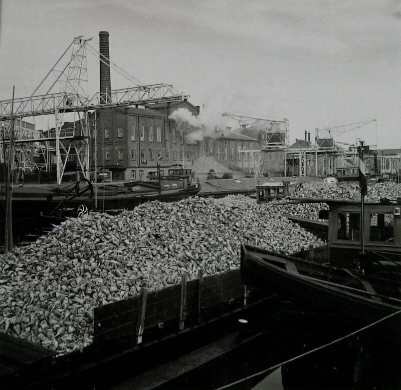 Aanvoer van bieten bij de coöperatieve suikerfabriek in 1965. (Zeeuwse Bibliotheek, Beeldbank Zeeland)