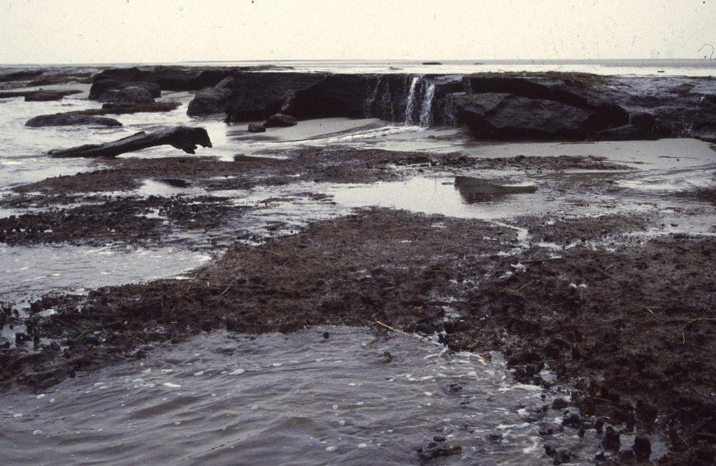 Veenklif in Saeftinghe met op de voorgrond zand uit de laatste ijstijd. (Beeldbank SCEZ)
