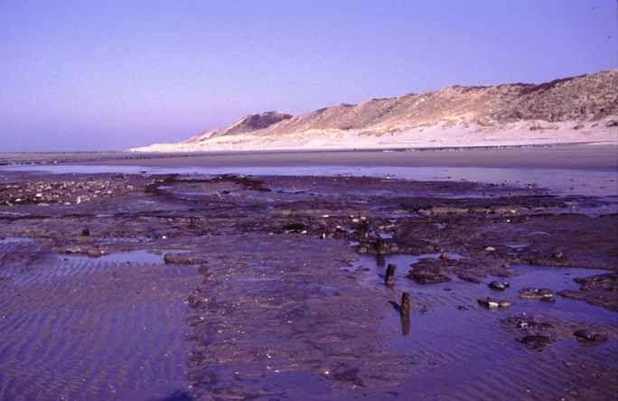 Sporen van de verdwenen havenbuurt van Westenschouwen komen door erosie van het strand aan het licht in 2003. (Beeldbank SCEZ)