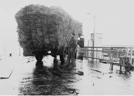 Ook landbouwproducten werden met de PSD-boten vervoerd. Op de foto een vrachtwagen met hooi, bij veerhaven De Val rond 1955. (Zeeuwse Bibliotheek, Beeldbank Zeeland)