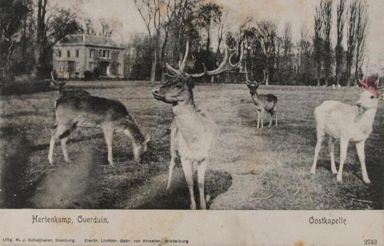 Prentbriefkaart met hertenkamp van Overduin, circa 1900. (ZB, Beeldbank Zeeland)