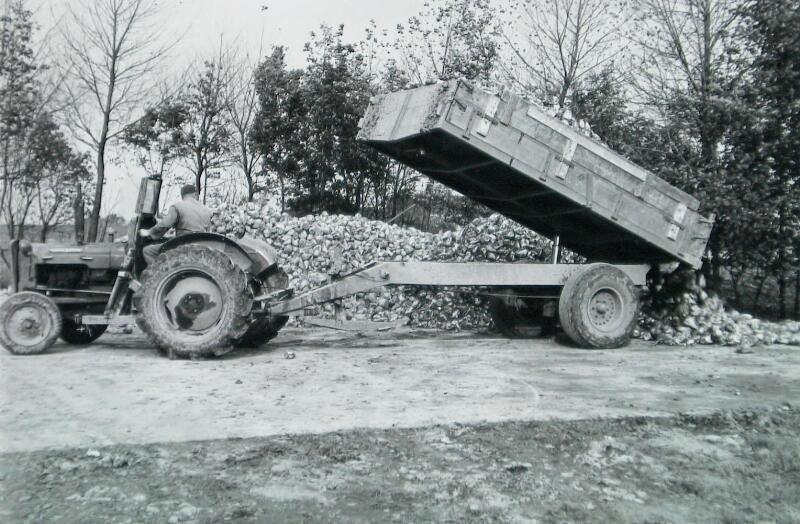 Bieten storten op betonplaten op het erf van de Anna Maria Hoeve in Geersdijk, 1966. (ZB, Beeldbank Zeeland)