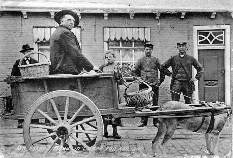 Hondenkar in Cadzand omstreeks 1900. (ZB, Beeldbank Zeeland)