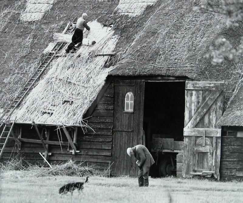 Rietdekker A. Spruit bij Landlust in Nieuwdorp aan het werk, midden jaren 1960. (ZB, Beeldbank Zeeland)