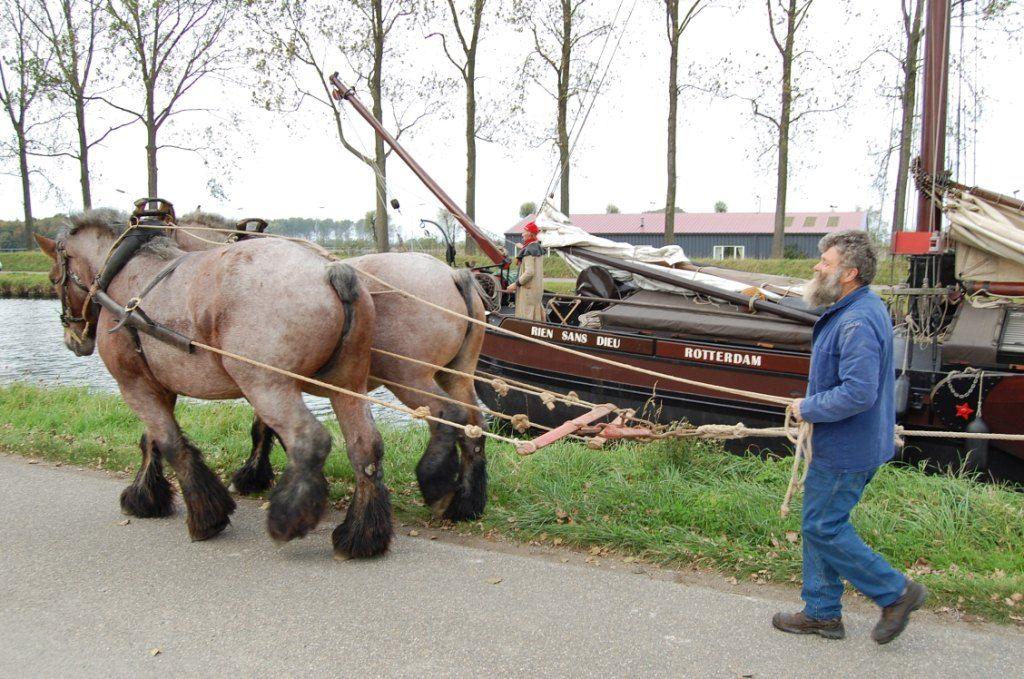 Trekpaarden werden ook ingezet voor het slepen van schepen met bijvoorbeeld suikerbieten. Op de foto de 'Bietentocht'; in 2010. (Beeldbank SCEZ)