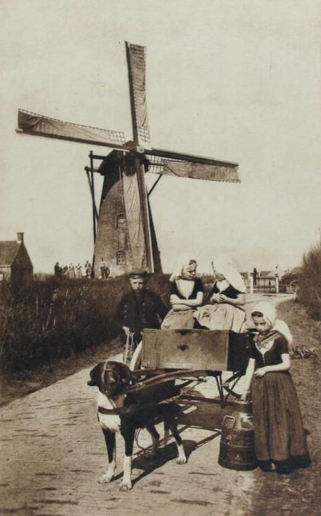 Windmolen bij Grijpskerke met op voorgrond mensen in streekdracht bij een hondenkar. Prentbriefkaart circa 1910 (ZB, Beeldbank Zeeland).