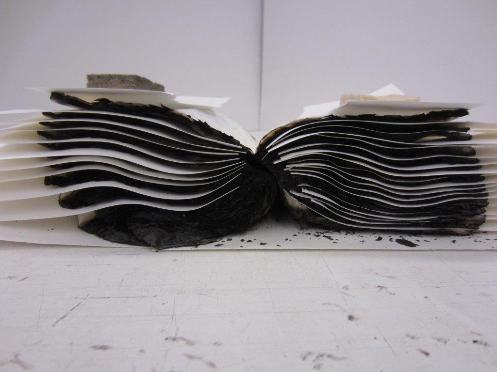 Tijdens het droogproces neemt filtreerpapier het vocht op dat tijdens het ontdooien vrijkomt. (Foto Tycho Kloeg)